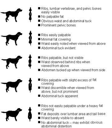 dog feeding guide by weight